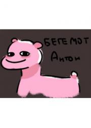Бегемотик Антон